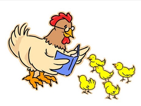 Chicken reading to chicks