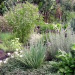 A garden of xeriscape plants
