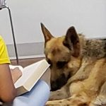 Therapy Dog Listening to a Book