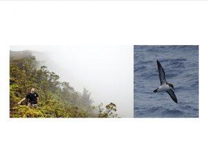 Kauai seabirds