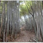 Bamboo forest next to temple