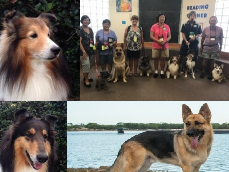 K9 Thera Pets Hawaii TJ, Jaz, BAiley
