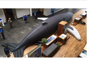 NOAA Whale Clip