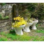 orchids in toilet gardening container