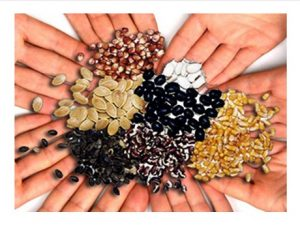 circle of hands holding seeds