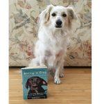 A service dog named Mochi