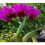 flowering vibrant orchid plant