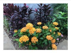 landscaped flowers and plants