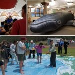 inflatble whale and oversized map of the pacific