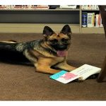 Lady the Book Dog