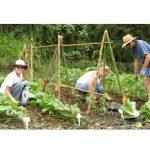 UH Master Gardener Program