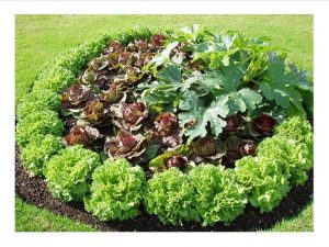 garden patch of ornamental edibles
